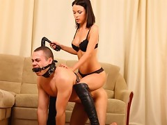 The ponyboy thinks that hes very lucky tonight since the elegant mistress he will have to carry around on his aching bac